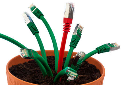 various network cable into a flower pot symbolic of broadband and internet development. photo