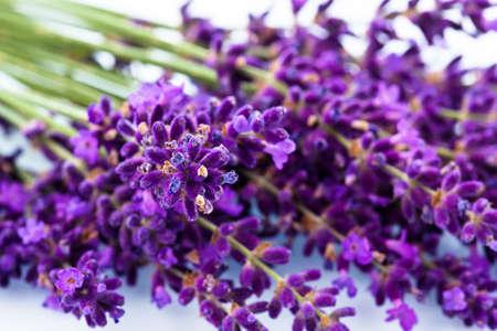 lavanda: flores de lavanda aislados en un fondo blanco flores de verano de color p�rpura