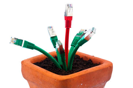 lan: various network cable in a flower pot  symbolic of broadband and internet development