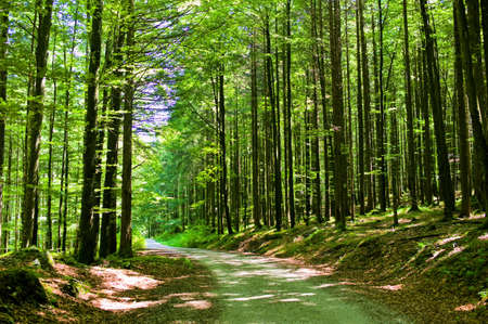 biotope: way through a forest  a forest trail is ideal for hiking