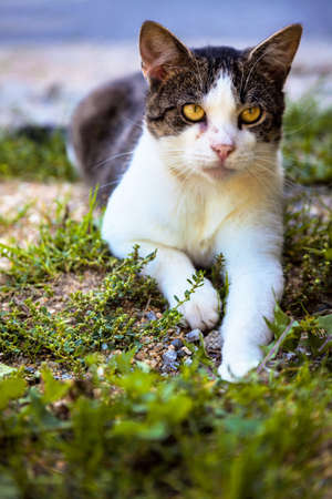 a spotted cat sitting on the floor and waits Stock Photo - 16154279