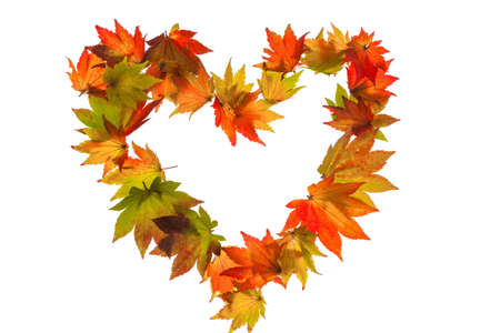 autumn leaves on a white background in a heart shape symbol for love photo