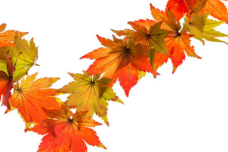 the colorful messenger of autumn  leaves on white background Stock Photo - 16328805