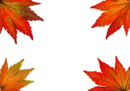 the colorful messenger of autumn  leaves on white background Stock Photo - 16328826