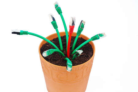 various network cable in a flower pot  symbolic of broadband and internet development  photo