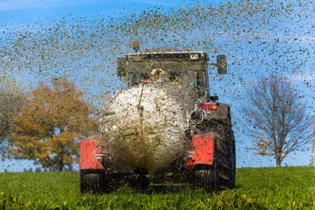manure: a tractor with manure fertilizes a field in autumn