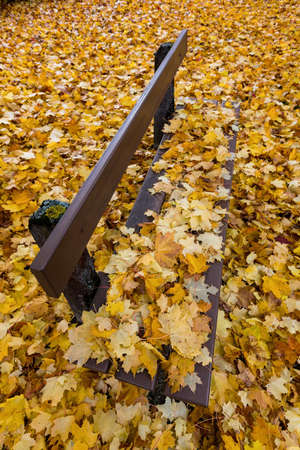 yellow autumn leaves have fallen from the trees  colorful season Stock Photo - 16679048
