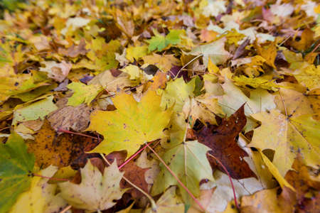 yellow autumn leaves have fallen from the trees  colorful season Stock Photo - 16679032