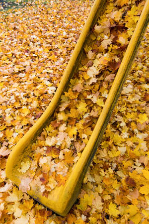 yellow autumn leaves have fallen from the trees  colorful season  Stock Photo - 16679042