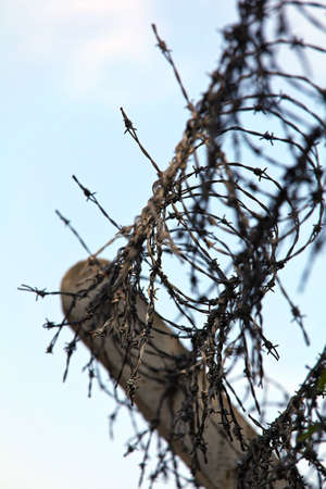asylum: barbed wire on a fence Stock Photo