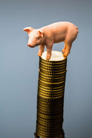 a pig stands on a pile of coins  rising feed costs in agriculture  diminishing returns for pork Stock Photo - 19986970
