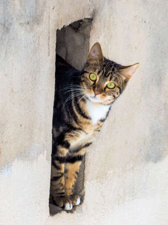 exploratory: a little cat looks curiously out of the niche of a wall