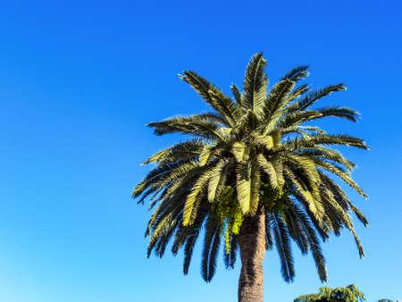 long haul journey: palm tree against blue sky
