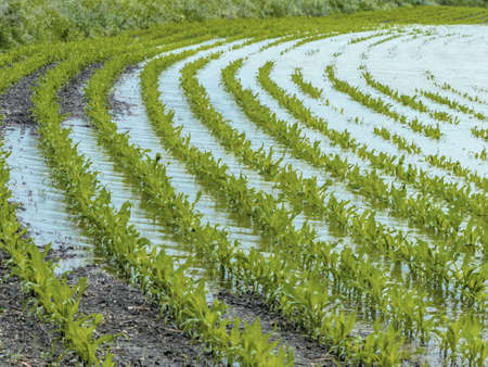 peasantry: flooding in agriculture
