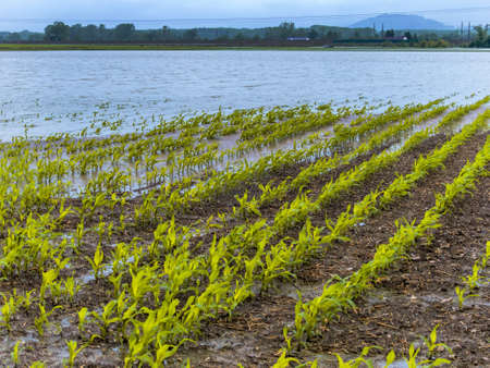 flooding in agriculture Stock Photo - 20771327