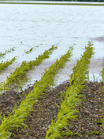 strongly: flooding in agriculture