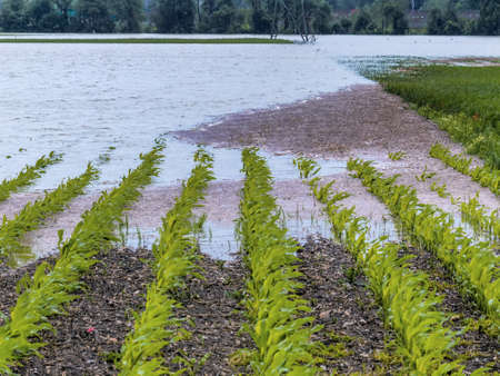 flooding in agriculture Stock Photo - 20771269