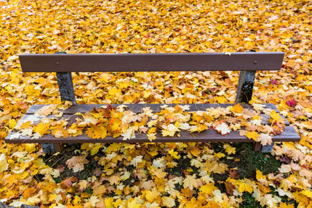 yellow autumn leaves have fallen from the trees  colorful season Stock Photo - 20772524