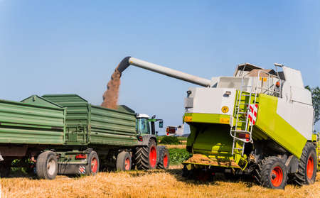 work area: a cornfield with wheat at harvest. a combine harvester at work.