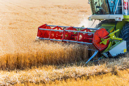 a cornfield with wheat at harvest. a combine harvester at work. photo