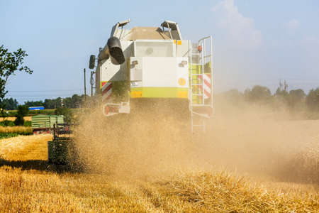 mow: a cornfield with wheat at harvest. a combine harvester at work.