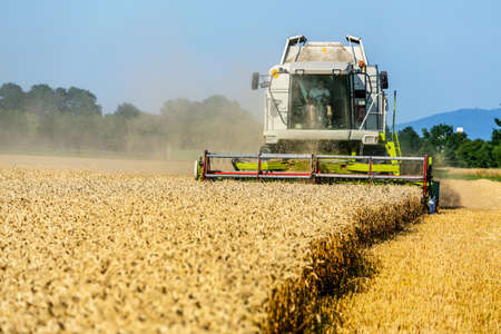 ein Kornfeld mit Weizen bei der Ernte. ein Mähdrescher bei der Arbeit.