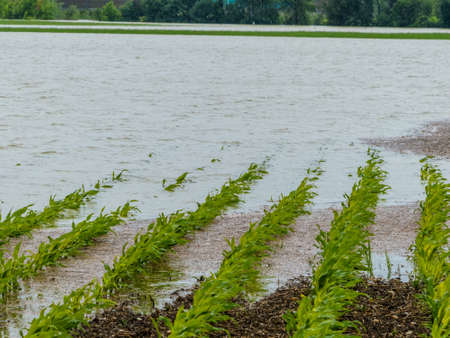 flood of 2013. austria. flooding and flooding in agriculture photo