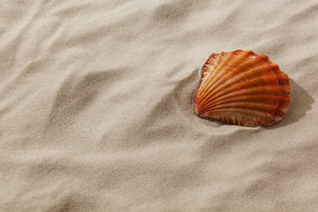 a shell is in the sand of a beach. desire for fair and recreation. Stock Photo