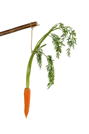 lie forward: carrot on a stick. fresh fruit and vegetables are always healthy. symbolic photo for motivation.