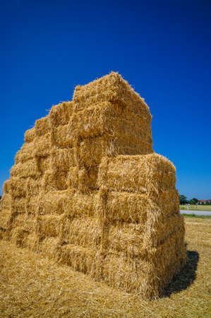 peasantry: bales of grain after harvesting a wheat field