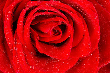 dear: a red rose with drops of water on the flower.
