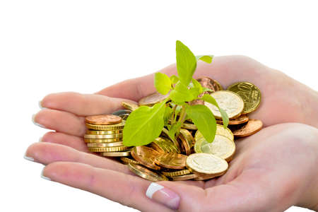 assessment system: hands with money and plant.  Stock Photo