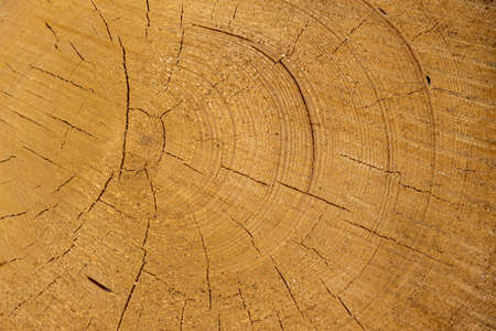 tree disc: trees in a forest were re-cut in wood working  natural, energy-friendly and sustainable heat  Stock Photo