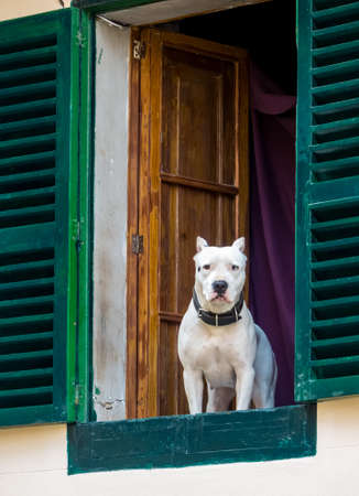 a dog looks cuusly out of a window Stock Photo - 27683603