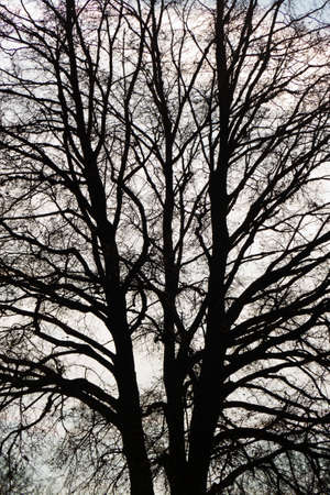 branched: the bare branches of a tree in winter Stock Photo