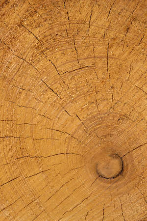 tree disc: trees in a forest were re-cut in wood working. natural, energy-friendly and sustainable heat.