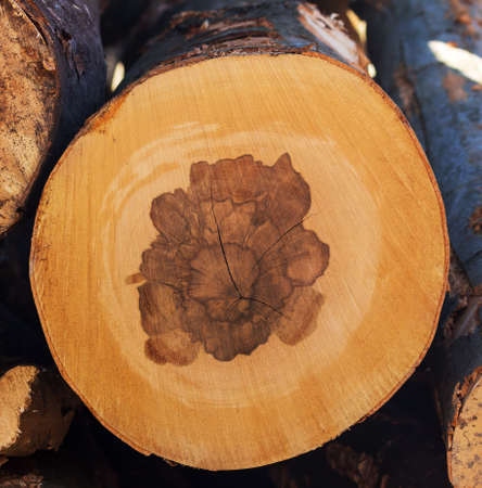 knothole: trees in a forest were re-cut in wood working. natural, energy-friendly and sustainable heat.