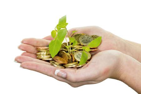 clavados: manos con el dinero y las plantas. símbolo foto surch por el creciente interés de capital en el ahorro. Foto de archivo