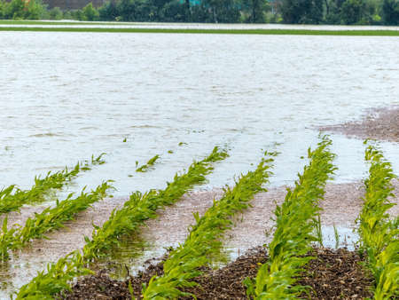 flood 2013 austria. floods and floods in agriculture photo