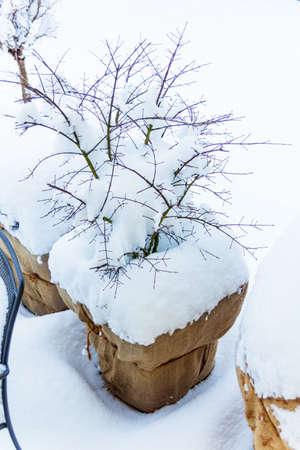 frostbitten: snowy planter in garden, photo icon for winter, winter dormancy and frost protection