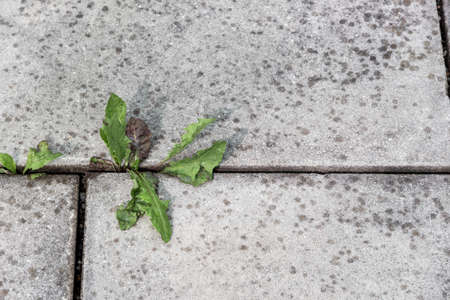 substantiate: plants growing between stone slabs out of a bottom