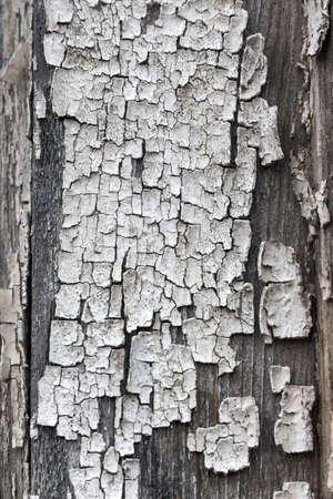 flaked: old, flaked paint a wooden box. weather