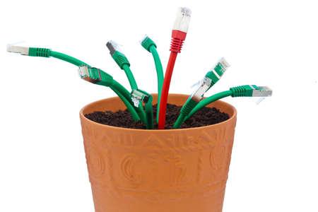 edv: cavi di rete in un vaso di fiori. simbolico della banda larga e lo sviluppo di Internet.