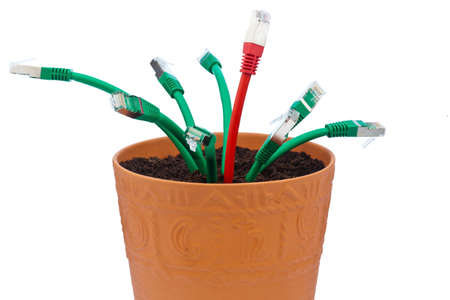 network cables in a flowerpot. symbolic of broadband and internet development. Stock Photo