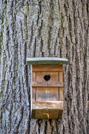 tierschutz: Nistkasten in einem Baum, Symbol der Tierschutz, Zucht, Vogel