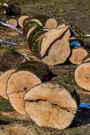 environmentally friendly: trees were felled for firewood for heat to get for the winter.