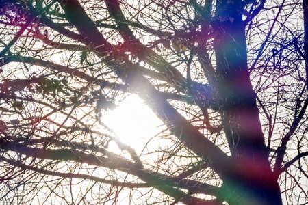 autumn trees against the light, symbolizing seasons change, silence photo