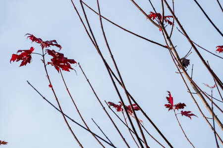transient: leaves with autumn colors, symbol of seasons, melancholy, transience