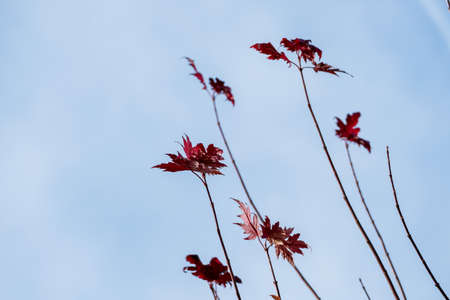 transience: leaves with autumn colors, symbol of seasons, melancholy, transience