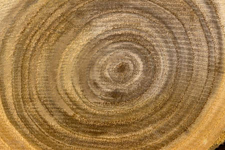 economic botany: a small tree trunk in a close-up. grain of wood